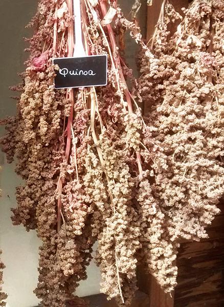 Quinoa klaser