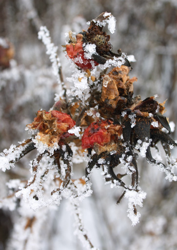 Quinoa Helsekost vintersalg